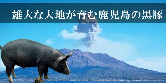 鹿児島の黒豚
